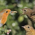 Free Mealworms Bird Food For Wild Birds